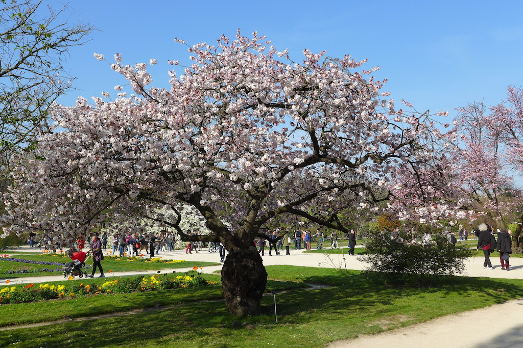 Top five walks in paris in spring good morning paris the - Jardin des plantes horaires d ouverture ...