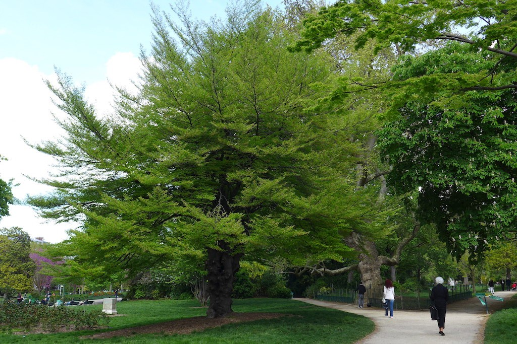 Parc Monceau Paris - Hundred-year-old tree