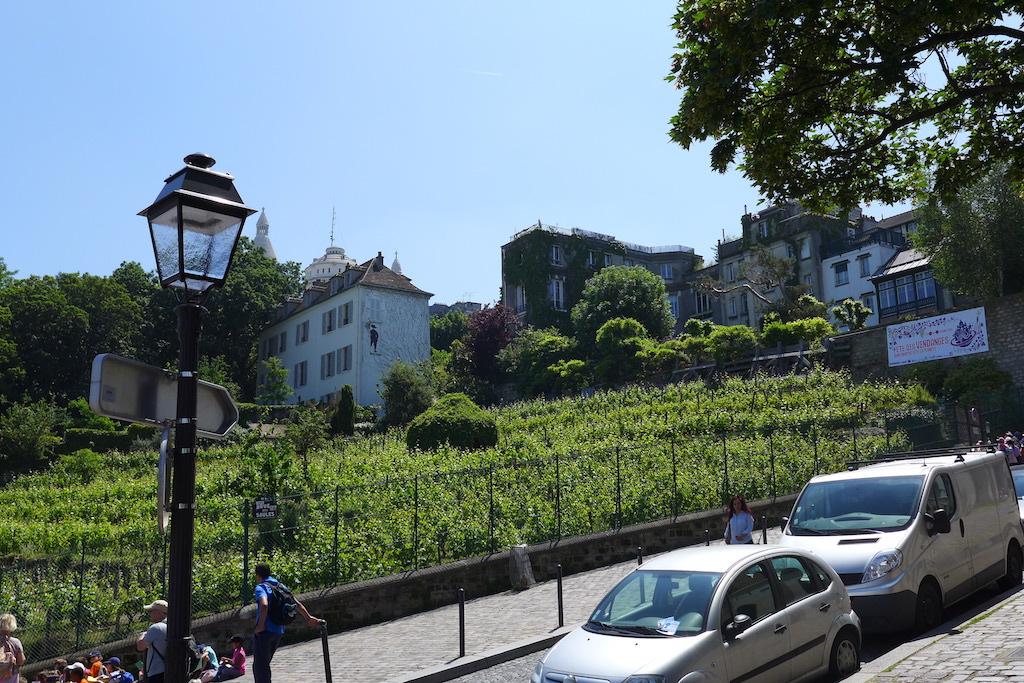 Montmartre- Vineyard - Le Clos Montmartre