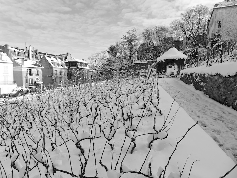 The Vineyard of Montmartre covered by Snow - Paris - February 2018